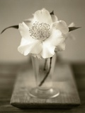 Elegant Flower in Small Vase Photographic Print by Ann Cutting