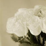 Bouquet of White Roses Photographic Print by Ann Cutting