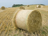 Round Hay Bales in Field Photographic Print by Mark Bolton