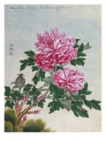 Chinese Watercolor of Pink Peonies Giclee Print