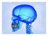 Cráneo humano Lámina giclée por Matthias Kulka