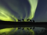 Horses under the Aurora Borealis Fotografie-Druck