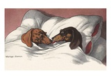 Mariage d'Amour with Two Dogs in Bed Giclee Print by Alexandra Day