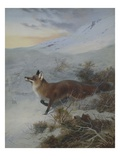 A Fox in a Winter Landscape Giclee Print by Archibald Thorburn
