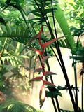 Heliconia Growing Among Tropical Ferns Photographic Print by Luca Tettoni