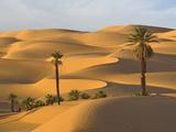 Palm Trees in Desert Fotografisk tryk af Frank Lukasseck