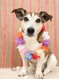 Dog with Lei Photographic Print by Ursula Klawitter