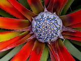 Center of an Agave Plant Photographic Print by Darrell Gulin