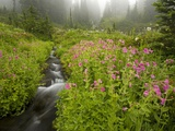 Monkey Flowers Along Paradise Creek Photographic Print by Craig Tuttle