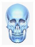 Crâne Impression giclée par Matthias Kulka