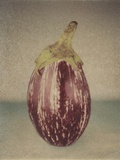 Italian Eggplant Photographic Print by Jennifer Kennard
