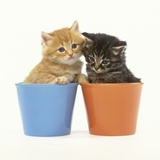 Orange and Tabby Kittens in Flower Pots Photographic Print by Pat Doyle