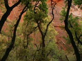 Trees in Zion National Park Photographic Print