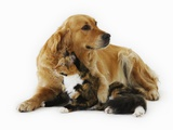 Cat and Golden Retriever Photographic Print by Russell Glenister
