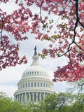 United States Capitol Dome in Washington, D.C. and Flowering Spring Trees Photographic Print by Tim Mcguire