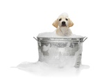 Puppy Taking Bath Photographic Print by Lew Robertson
