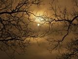 Branches Surrounding Harvest Moon Fotografie-Druck von Robert Llewellyn