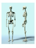 Two Skeletons Impression giclée par Matthias Kulka