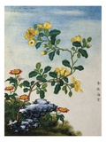 18th-Century Chinese Watercolor of Gold Thread Plant Giclee Print
