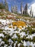 Snowy Hill at Mount Rainier National Park Photographic Print by Craig Tuttle