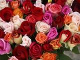 Roses for Sale at Flower Market Fotografie-Druck von Tibor Bognár