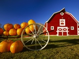 Pumpkins on Wagon near Barn Photographic Print by Dave Reede