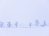 Trees Along Fence in Winter Photographic Print by Jim Craigmyle