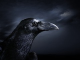 Profile of a Crow Photographic Print by Digital Zoo