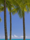Palm Trees on Beach Photographic Print by Jonathan Hicks