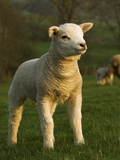 Beltex Crossbred Lamb in Green Pasture Photographie par Wayne Hutchinson