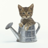 Kitten Sitting in a Watering Can Photographic Print by Pat Doyle