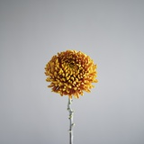 Orange Flower Photographic Print by David Vintiner