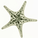 Starfish Photographic Print