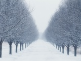 Tree-lined Road in Winter Photographic Print by Robert Llewellyn