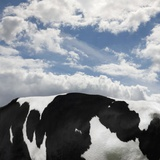 Cow and Sky Patterns Photographic Print by Ashley Jouhar