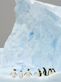 Gentoo and Chinstrap Penguins on Iceberg in Gerlache Strait Photographic Print by John Eastcott & Yva Momatiuk