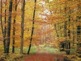 Forest Road in Autumn Photographic Print by Manfred Mehlig