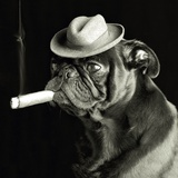 Pug smoking a cigar Photographic Print by EJ Lowe