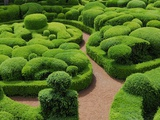 Topiary Garden at Chateau de Marqueyssac Photographic Print by David Burton