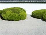 Japanese zen garden Photographic Print