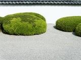 Japanese zen garden Photographic Print