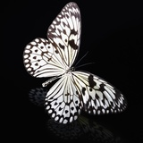 Butterfly Photographic Print by Sean Justice