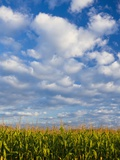 Corn Plants and Sky Photographic Print by Jim Craigmyle