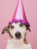 Dog Wearing Party Hat Photographic Print by Ursula Klawitter
