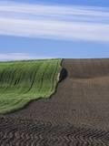 Wheat Field and Plowed Land Photographic Print by Frank Lukasseck