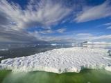 Crabeater Seals on Ice Floe at Holtedehl Bay Photographic Print by John Eastcott & Yva Momatiuk