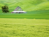 Old Barn in Green Agricultural Fields Photographic Print by Terry Eggers