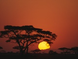 Sunrise and Acacia Trees Photographic Print