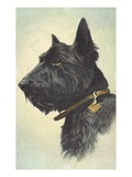 Scottish Terrier Giclee Print by Trolley Dodger