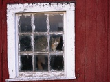 Cat sitting in a barn window Photographic Print by Scott Barrow